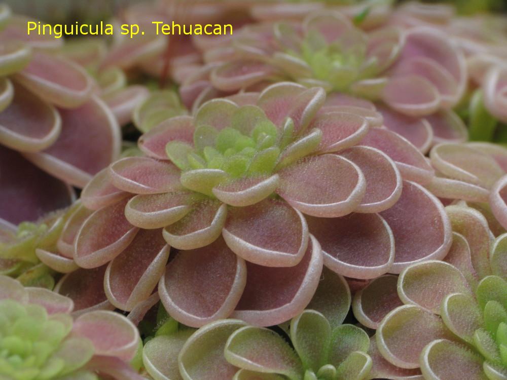 Tehuacan2.jpg
