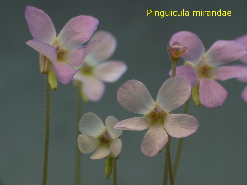 mirandae3.jpg