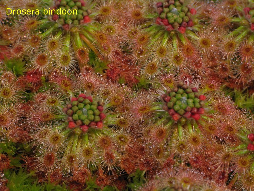 bindoon2.jpg