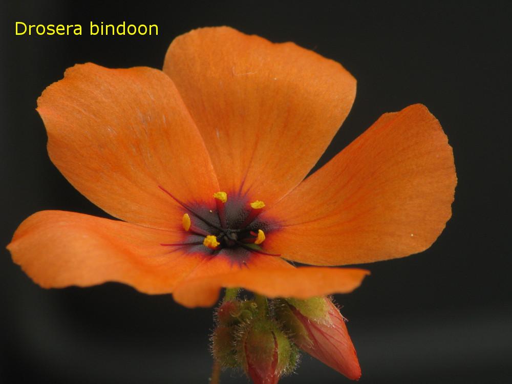 bindoon5.jpg
