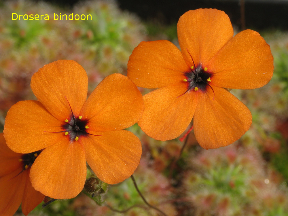 bindoon7.jpg
